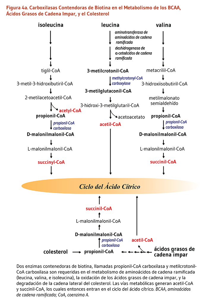 bicarbonato de sodio es bueno para el acido urico acido urico insulina remedios para bajar acido urico alto