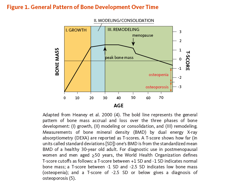 Figure 1. General Pattern of Bone Development Over Time. The figure shows the general pattern of bone mass accrual and loss over the three phases of bone development: (I) growth (sharp/rapid increase of bone mass until age 20), (II) modeling or consolidation (slow increase of bone mass until peak bone mass is reached around age 30), and (III) remodeling (the period of maintenance and/or decline of bone mass (about age 30 until death). A sharp/rapid decline of bone mass is seen in women as a result of menopause. The T-score, which measures bone mineral density (BMD) by DEXA, is used as a clinical proxy for bone mass. As defined by the World Health Organization (WHO), osteopenia precedes osteoporosis and occurs when one's bone mineral density (BMD) is between 1 and 2.5 standard deviations (SD) below that of the average young adult (30 years of age).