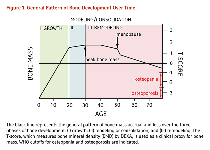 Figure 1. General Pattern of Bone Development Over Time. The figure shows the general pattern of bone mass accrual and loss over the three phases of bone development: (I) growth (sharp/rapid increase of bone mass until age 20), (II) modeling or consolidation (slow increase of bone mass until peak bone mass is reached around age 30), and (III) remodeling (the period of maintenance and/or decline of bone mass (about age 30 until death). A sharp/rapid decline of bone mass is seen in women as a result of menopause. The T-score, which measures bone mineral density (BMD) by DEXA, is used as a clinical proxy for bone mass. As defined by the World Health Organization (WHO), osteopenia precedes osteoporosis and occurs when one's bone mineral density (BMD) is between 1 and 2.5 standard deviations (SD) below that of the average young adult (30 years of age) woman.