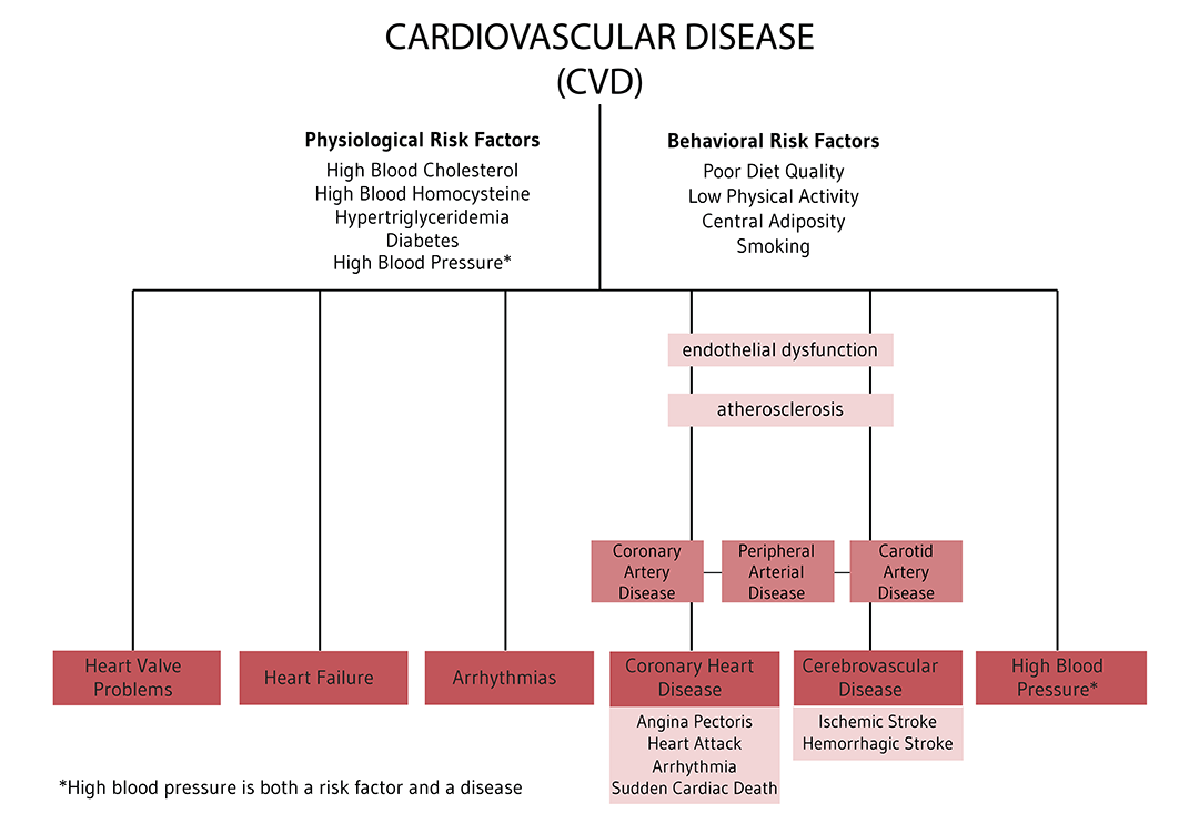 Figure. Overview of Cardiovascular Risk Factors and Conditions