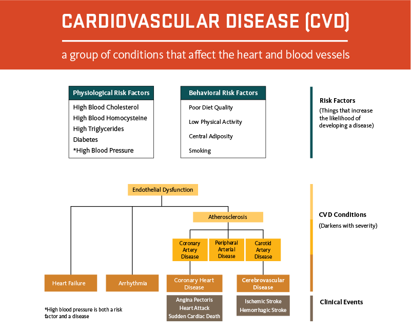 Figure. Overview of Cardiovascular Risk Factors and Conditions.