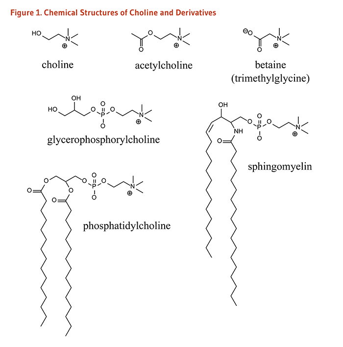 Figure 1. Chemical structures of choline and its derivatives, acetylcholine, betaine (trimethylglycine), glycerophosphorylcholine, phosphatidylcholine, and sphingomyelin.