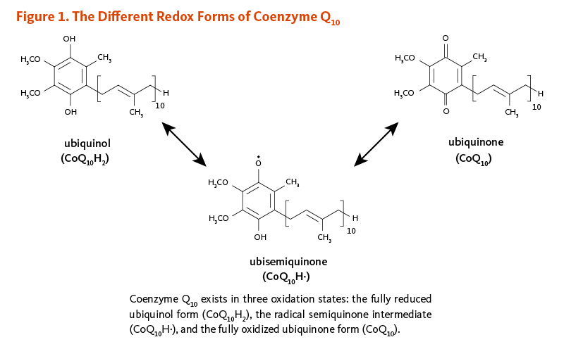 Figure 1. The Different Redox Forms of Coenzyme Q10. Coenzyme Q10 exists in three oxidation states: the fully reduced ubiquinol form (ubiquinol; CoQ10H2), the radical semiquinone intermediate (ubisemiquinone; CoQ10H.), and the fully oxidized ubiquinone form (CoQ10).