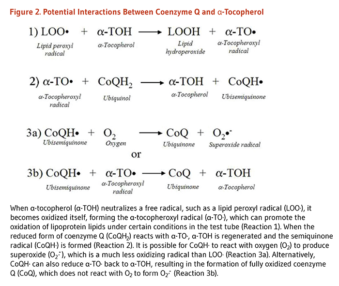 Coenzyme Q10 Figure 2. Potential Interactions Between Coenzyme Q and Alpha-  Tocopherol