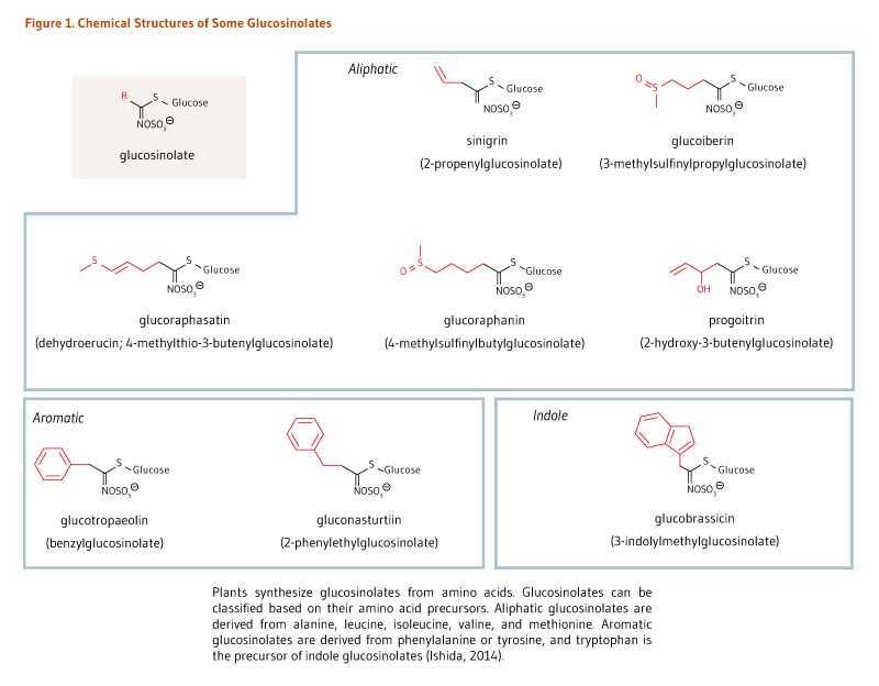 Figure 1. Chemical Structures of Some Glucosinolates. Chemical structures of aliphatic glucosinolates, including sinigrin, glucoiberin, glucoraphasatin, glucoraphanin, and progoitrin. Chemical structures of two aromatic glucosinolates, glucotropaeolin and gluconasturtiin. Chemical structure of the indole glucosinolate, glucobrassicin. Plants synthesize glucosinolates from amino acids. Glucosinolates can be classified based on their amino acid precursors. Aliphatic glucosinolates are derived from alanine, leucine, isoleucine, valine, and methione. Aromatic glucosinolates are derived from phenylalanine or tyrosine, and tryptophan is the precursor of indole glucosinolates (ishida, 2014).