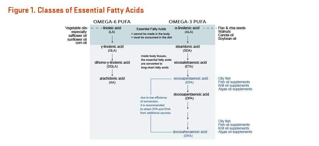 There are two essential fatty acids: linoleic acid (an omega-6 polyunsaturated fatty acid) and alpha-linolenic acid (an omega-3 polyunsaturated fatty acid). These fatty acids are considered essential nutrients because they cannot be made in the body and must be consumed in the diet. Vegetable oils, especially safflower oil, sunflower oil, and corn oil, are a good source of linoleic acid.Flax and chia sees, walnuts, canola oil, and soybean oil are good sources of alpha-linoleic acid. Inside body tissues, the essential fatty acids are converted to long-chain fatty acids. Due to low efficiency of conversion, it is recommended to obtain eicosapentaenoic acid (EPA) and docosapentaenoic acid (DHA) from additional sources. Oily fish, fish oil supplements, krill oil supplements, and algae oil supplements are good sources of EPA and DHA.