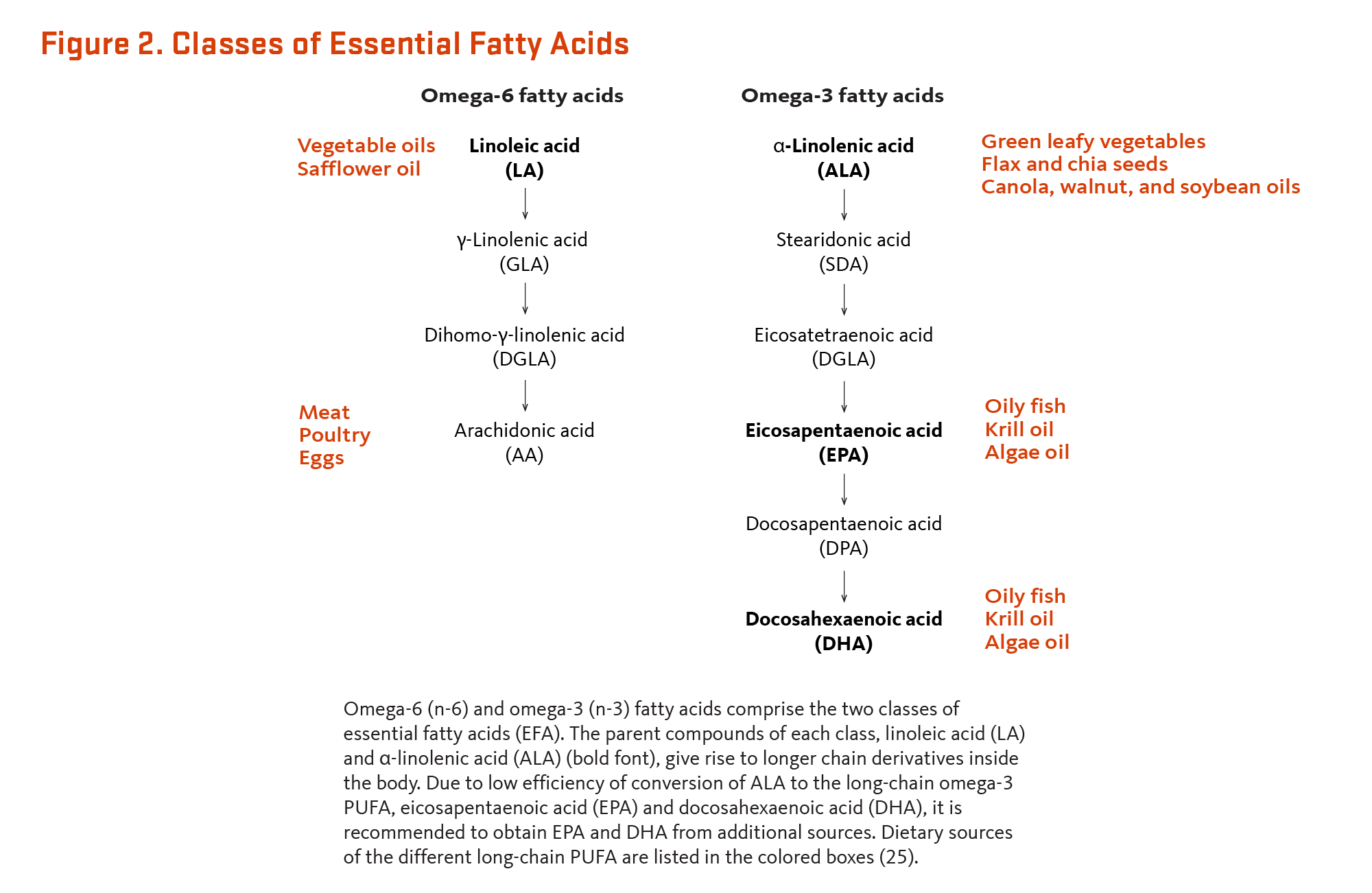 Essential Fatty Acids | Linus Pauling Institute | Oregon