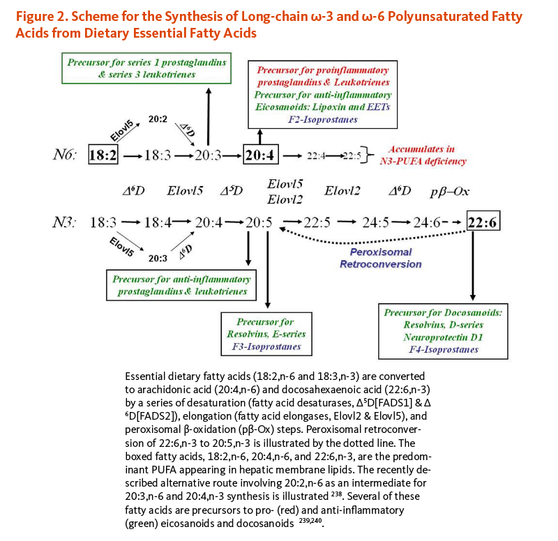 Figure 2. Scheme for the Synthesis of Long-chain omega-3 and omega-6 Polyunsaturated Fatty Acids from Dietary Essential Fatty Acids. Essential fatty acids (18:2,n-6 and 18:3,n-3) are converted to arachidonic acid (20:4,n-6) and docosahexaenoic acid (22:6,n-3) by a series of desaturation (fatty acid elongases, Elovl2 and Elovl5), adn peroxisomal beta-oxidation steps. The fatty acids, 18:2,n-6, 20:4,n-6, and 22:6,n-3, are the predominant polyunsaturated fatty acid appearing in hepatic membrane lipids.