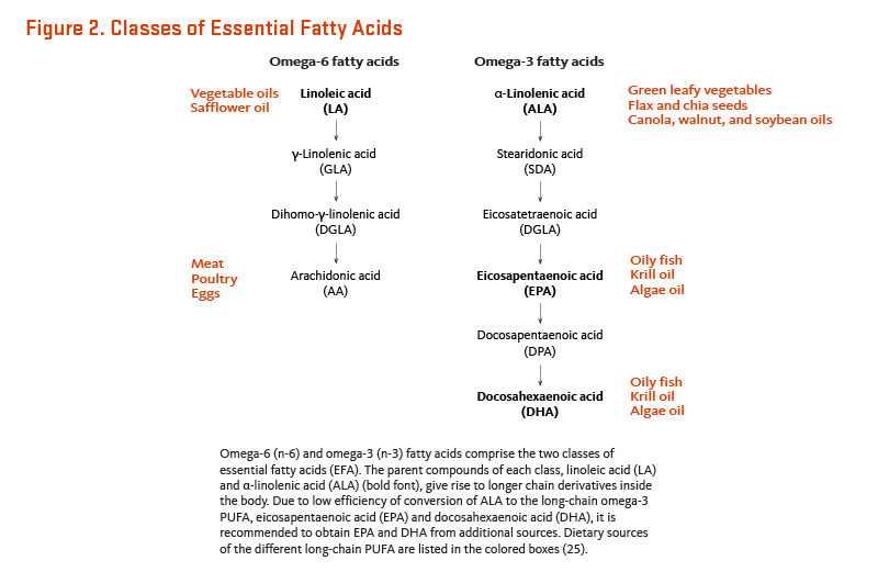 Figure 2. Classes of Essential Fatty Acids. Omega-6 (n-6) and omega-3 (n-3) fatty acids comprise the two classes of essential fatty acids (EFA). The parent compounds of each class, linoleic acid (LA) and alpha-linolenic acid (ALA), give rise to longer chain derivatives inside the body. Due to low efficiency of conversion of ALA to the long-chain omega-3 PUFA, eicosapentaenoic acid (EPA) and docosahexaenoic acid (DHA), it is recommended to obtain EPA and DHA from additional sources. Dietary sources of linoleic acid include vegetables oils like safflower oil. Dietary sources of ALA include green leafy vegetables; flax and chia seeds; and canola, walnut, and soybean oils. Arachidonic acid is found in meat, poultry, and eggs. Sources of EPA and DHA include oily fish, algae oil, and krill oil.