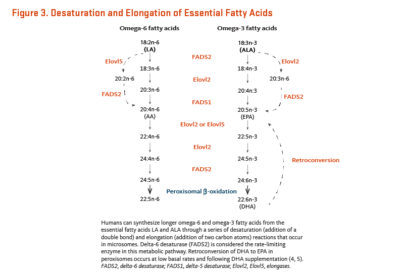Figure 3. Desaturation and Elongation of Essential Fatty Acids. Humans can synthesize longer omega-6 and omega-3 fatty acids from the essential fatty acids LA and ALA through a series of desaturation (addition of a double bond) and elongation (addition of two carbon atoms) reactions that occur in microsomes. Delta-6 desaturase is considered the rate-limiting enzyme in this metabolic pathway. Retroconversion of DHA to EPA in peroxisomes occurs at low basal rates and following DHA supplementation.