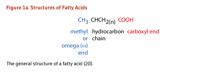 where does fatty acid synthesis occur