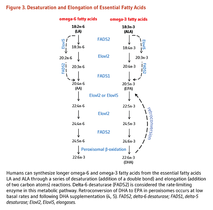 Essential Fatty Acids Linus Pauling Institute Oregon State