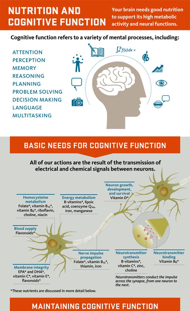 cognition infographic thumbnail