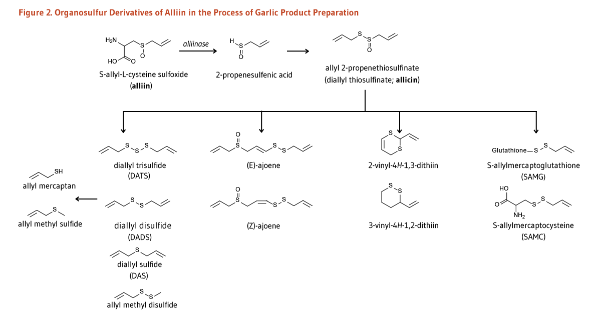 Garlic | Linus Pauling Institute | Oregon State University
