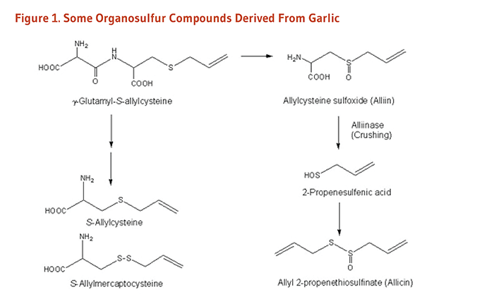 Figure 1. Chemical Structures of Some Organosulfur Compounds Derived From Garlic: gamma-glutamyl-S-allylcysteine, S-allylcysteine, S-allylmercaptocysteine, allylcysteine sulfoxide (alliin), 2-propenesulfenic acid, and allyl 2-propenethiosulfinate (allicin).