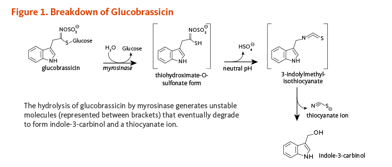 Figure 1. Breakdown of Glucobrassicin. Glucobrassicin is metabolized by myrosinase to the unstable intermediate, thiohydroximate-O-sulfonate form, then in neutral pH to the unstable intermediate, 3-inolylmethyl-isothiocyanate, then eventually degrades to form indole-3-carbinol and a thiocyanate ion.