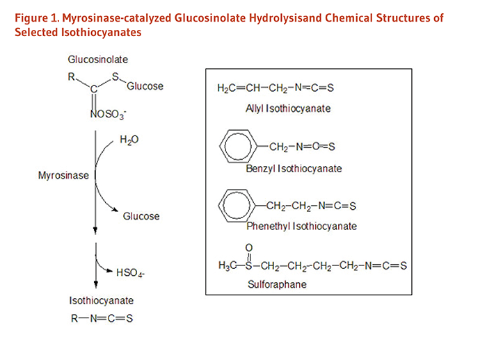 Figure 1. Myrosinase catalyzes the hydrolysis of glucosinolate to isothiocyanate. Chemical structures of selected isothiocyanates: allyl isothiocyanate, benzyl isothiocyanate, phenethyl isothiocyanate, and sulforaphane.