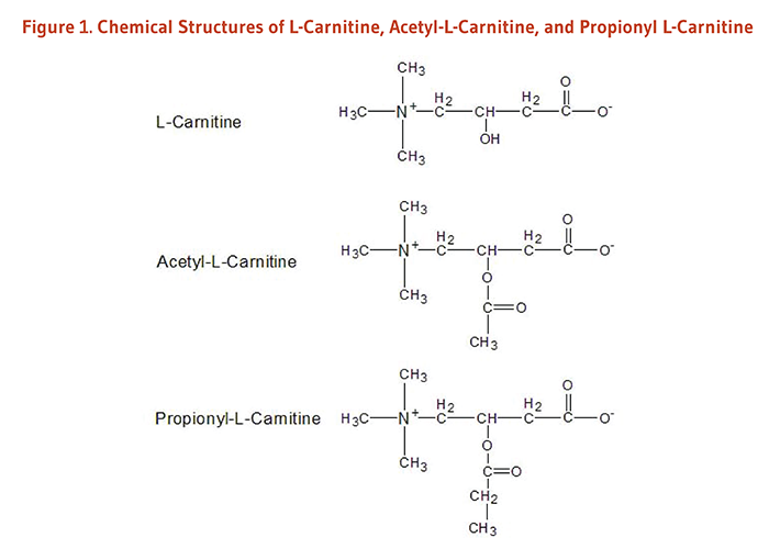 Figure 1. Chemical Structures of L-Carnitine, Acetyl-L-Carnitine, and Propionyl L-Carnitine.