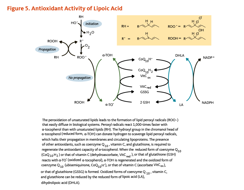 Figure 5. Antioxidant Activity of Lipoic Acid. The peroxidation of unsaturated lipids leads to the formation of lipid peroxyl radicals that easily diffuse in biological systems. Peroxyl radicals react 1,000-times faster with alpha-tocopherol than with unsaturated lipids. The hydroxyl group in the chromanol head of alpha-tocopherol (reduced form) can donate hydrogen to scavenge lipid peroxyl radicals, which halts their propagation in membranes and circulating lipoproteins. The presence of other antioxidants, such as coenzyme Q10, vitamin C, and glutathione, is required to regenerate the antioxidant capacity of alpha-tocopherol. When the reduced form of coenzyme Q10 or that of vitamin C, or that of glutathione reacts with oxidized alpha-tocopherol, the reduced form of alpha-tocopherol is generated and the oxidized form of coenzyme Q10 (ubisemiquinone) or that of vitamin C (ascorbate), or that of glutathione (GSSG) is formed. Oxidized forms of coenzyme Q10, vitamin C, and glutathione can be reduced by the reduced form of lipoic acid, dihydrolipoic acid.