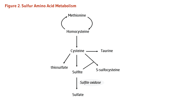 Figure 2. Sulfur Amino Acid Metabolism.