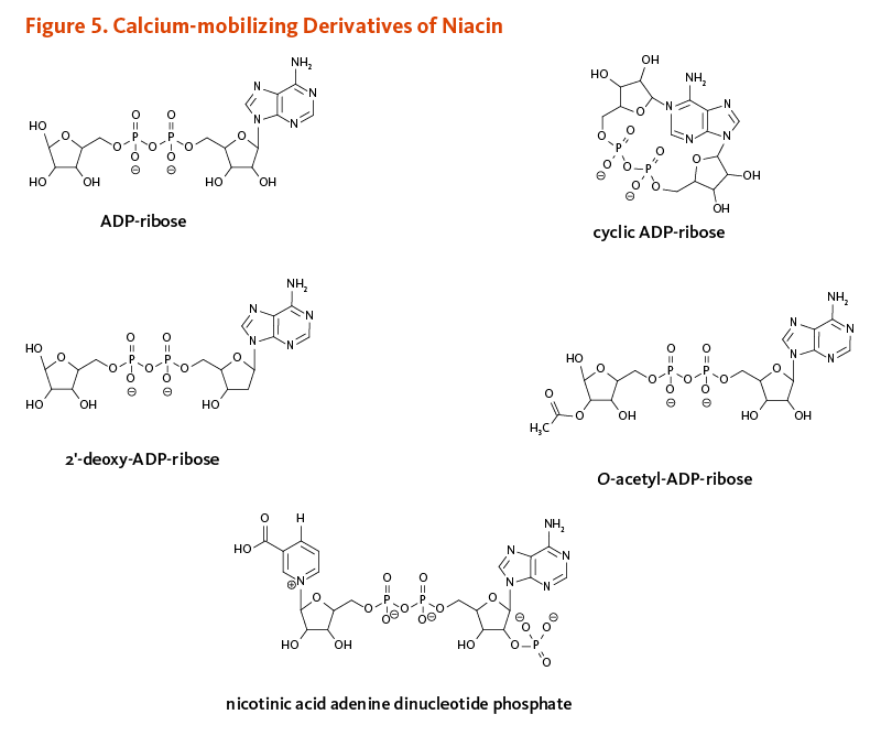 Figure 5. Calcium-mobilizing Derivatives of Niacin. Chemical structures of ADP-ribose, cyclic ADP-ribose, 2'-deoxy-ADP-ribose, O-acetyl-ADP-ribose, and nicotinic acid adenine dinucleotide phosphate.