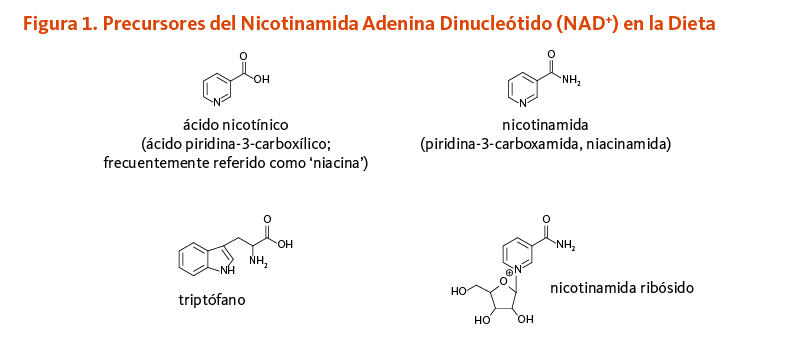 Figura 1. Precursores del Nicotinamida Adenina Dinucleótido (NAD+) en la Dieta.  Estructuras químicas de ácido nicotínico (ácido piridina-3-carboxílico; frecuentemente referido como 'niacina'), triptófano, nicotinamida (piridina-3-carboxamida, niacinamida), y nicotinamida ribósido.