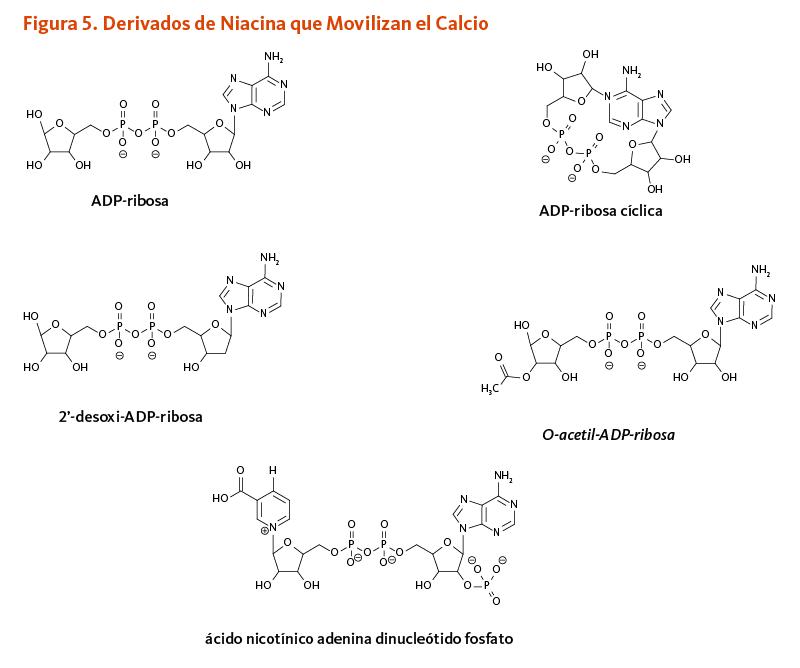 Figura 5. Derivados de Niacina que Movilizan el Calcio. Estructuras químicas de ADP-ribosa, ADP-ribosa cíclica, 2'-desoxi-ADP-ribosa, O-acetil-ADP-ribosa, y ácido nicotínico adenina dinucleótido fosfato.