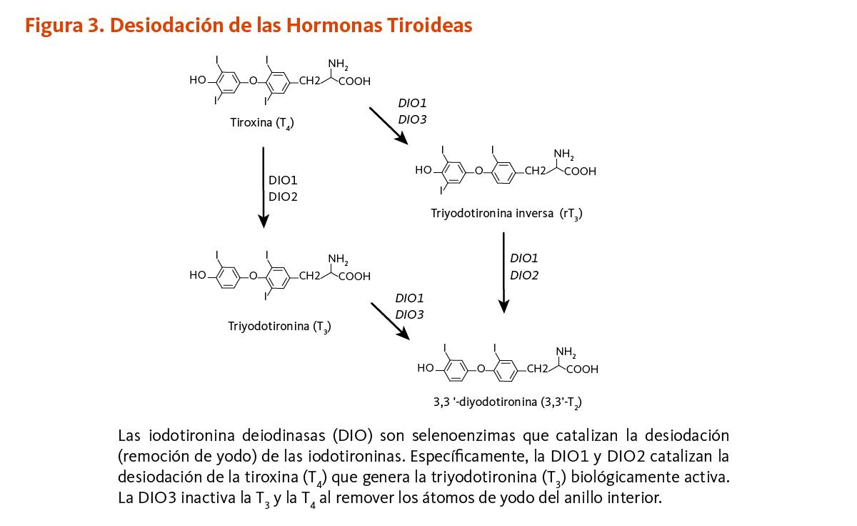kde program review for k-3 pastillas para adelgazar