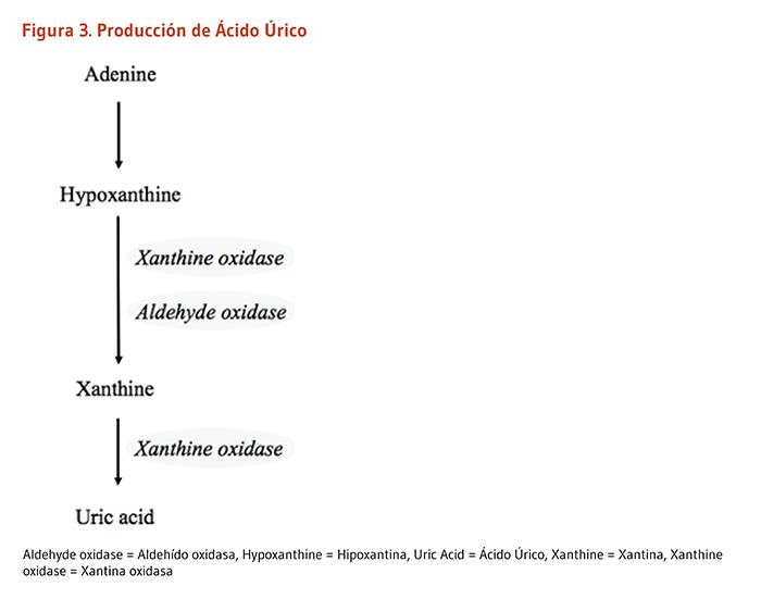 frutas y verduras para evitar el acido urico proteina que no suba los acido urico aparato para medir el acido urico