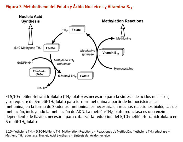 Aprender cómo menus dieta metabolismo acelerado
