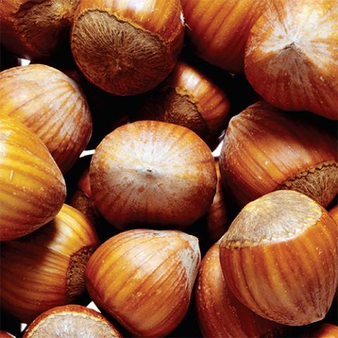 Oregon hazelnuts - a source of vitamin E?