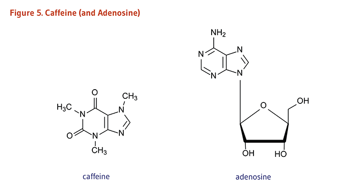 Figure 5. Chemical Structures of Caffeine and Adenosine