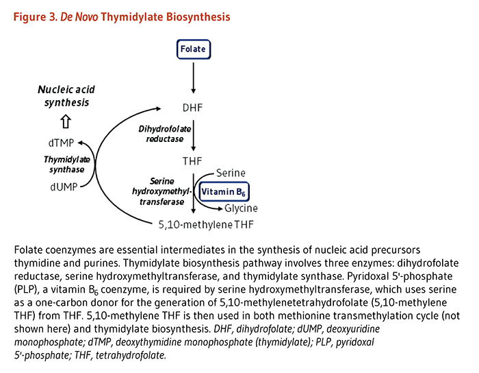 Figure 3. De Novo Thymidylate Biosynthesis. Folate coenzymes are essential intermediates in the synthesis of nucleic acid precursors thymidine and purines. Thymidylate biosynthesis pathway involves three enzymes: dihydrofolate reductase, serine hydroxymethyltransferase, and thymidylate synthase. Pyridoxal 5'-phosphate (PLP), a vitamin B6 coenzyme, is required by serine hydroxymethyltransferase, which uses serine as a one-carbon donor for the generation of 5,10-methylenetetrahydrofolate (5,10-methylene THF) from THF. 5,10-methylene THF is then used in both methionine transmethylation cycle (not shown in the figure) and thymidylate biosynthesis.