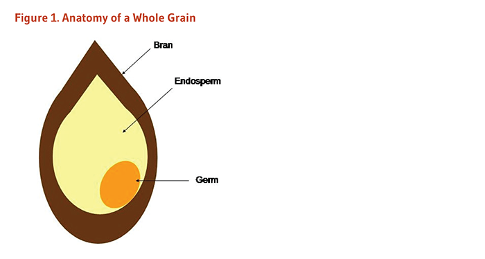 Figure 1. Anatomy of a Whole Grain, including bran, endosperm, and germ.